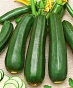 COURGETTE DIAMANT HYBRIDE